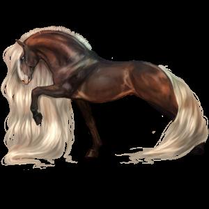Riding Horse Arabian Horse Bay
