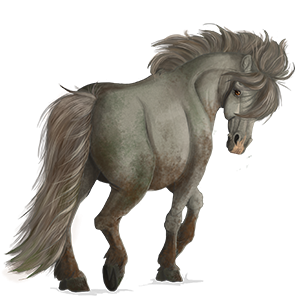 Pony Welsh Mouse Gray