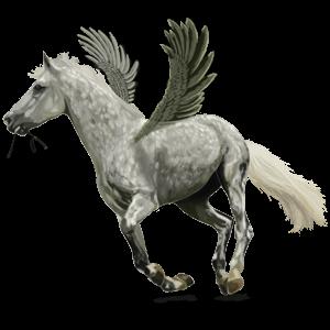 Pegasus Argentinischer Criollo Cremello