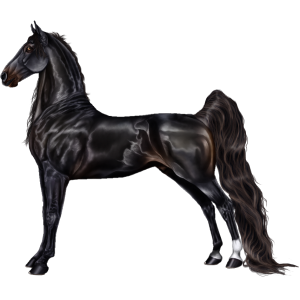 Riding Horse Tennessee Walker Black