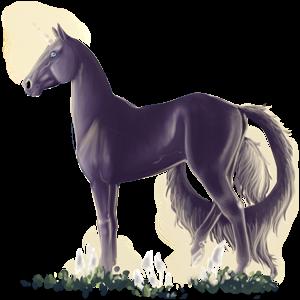 Riding unicorn Morgan Black