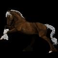 Ratsuhevonen Holsteininhevonen Sysirautias