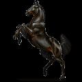 Cavalo de passeio Hanoveriano Alazão crinalvo