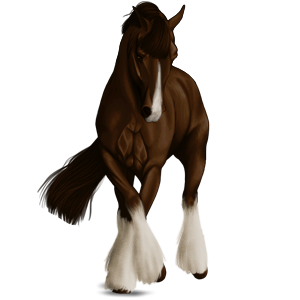 Draught horse Percheron Light Grey