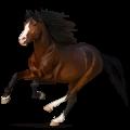 Верховая лошадь Хановериян, Ганноверская Серый в яблоках