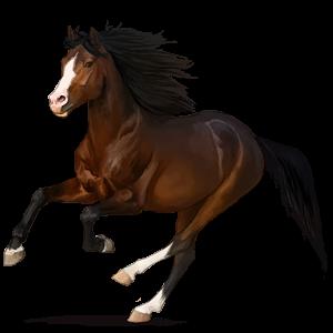 Riding Horse Mustang Dark Bay