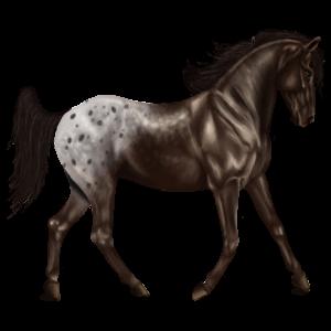 Riding Horse Knabstrupper Black Spotted Blanket