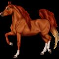 حصان ركوب الأكحل تيكي كميت كرزي