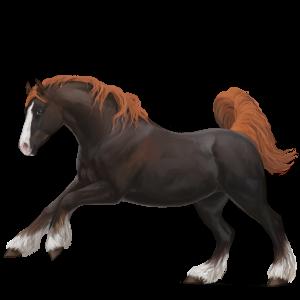 Pony Highland Pony Chestnut