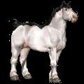 Cavalo de tração Percheron Tordilho negro