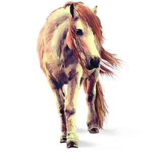 Pony Newfoundland Pony Cherry bay