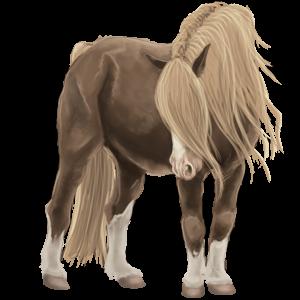 Pegasus-Reitpferd Argentinischer Criollo Dunkelbrauner