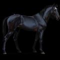 Riding Horse Selle Français Liver chestnut