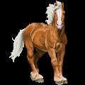 Cheval de trait Drum Horse Pie Tovero Noir