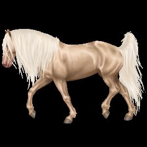 Riding Horse Paint Horse Palomino Overo