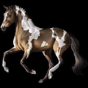 Pegasus-Reitpferd Selle Français Dunkelbrauner