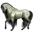 Riding Horse Holsteiner Dapple Gray