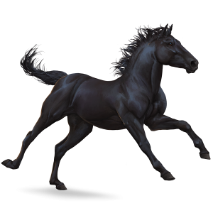 Riding Horse Thoroughbred Dapple Grey