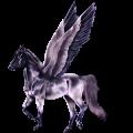 Pegasus Hannoveranare Svart