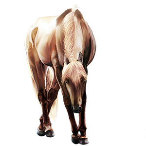 Riding Horse Quarter Horse Cremello
