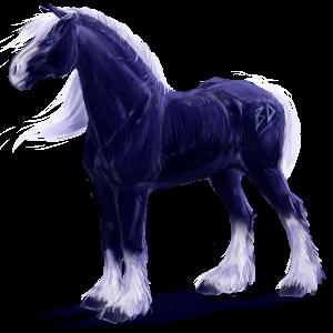 Draft horse Percheron Black