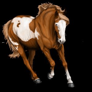 Riding Horse Nokota Chestnut Overo