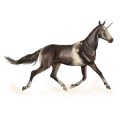Riding unicorn Peruvian Paso Strawberry roan