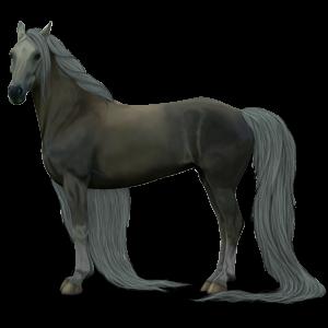 Riding Horse Akhal-Teke Dun