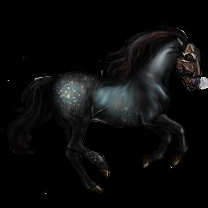 Riding Horse Thoroughbred Black