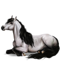 Pony Newfoundland Pony Mouse Gray