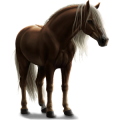 Pony Chincoteague Pony Bay