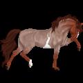 Riding Horse Hanoverian Chestnut