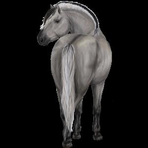 Pony Fjord Gra