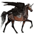Winged riding unicorn Marwari Dark Bay
