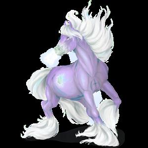 Koń wierzchowy Cob Irlandzki Izabelowata Tobiano