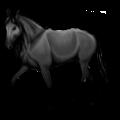 Riding pegasus Thoroughbred Dark Bay