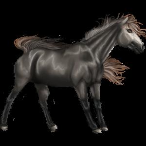 Pony Quarter Pony Liver chestnut