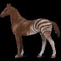Cavalo de passeio Trakehner Alazão tostado