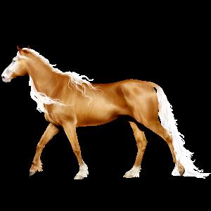 Riding Horse Thoroughbred Cherry bay