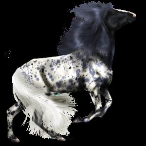 Cavallo da corsa Criollo Argentino Manto Nero Maculato