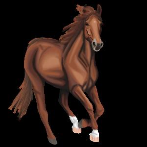 Riding Horse Hackney Chestnut