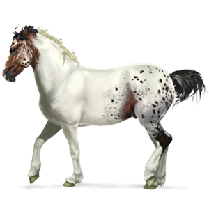 Pony Connemara Cherry bay