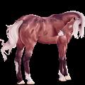 Riding Horse Roan