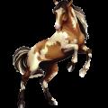 Riding Horse Mustang Dun