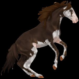 Riding Horse Nokota Dark bay Overo