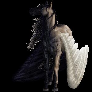 Pegaz wierzchowy Koń berberyjski Ciemnogniada