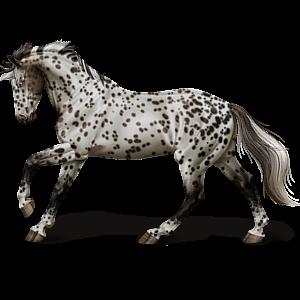 Jezdecký pegas Tennesseeský mimochodník Vraník