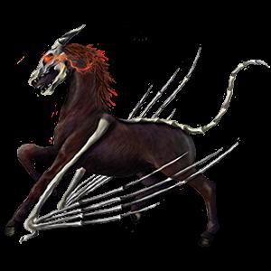 Riding pegasus Marwari Black