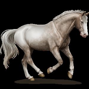 Riding Horse Mustang Flaxen Chestnut