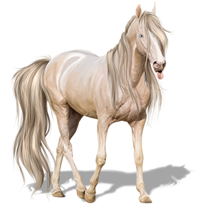 Cavalo de passeio Marwari Lazão escuro